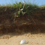 sand-bunker