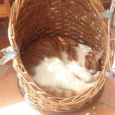 Sleep Basket