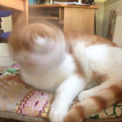 Spinning Brain
