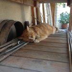 Siesta Bench