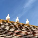 Sentry Birds